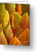 Veins Greeting Cards - Autumn leaves arrangement Greeting Card by Elena Elisseeva