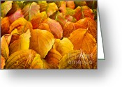 Veins Greeting Cards - Autumn leaves  Greeting Card by Elena Elisseeva
