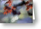 Leaves Photographs Greeting Cards - Autumn Red  Greeting Card by Rob Travis