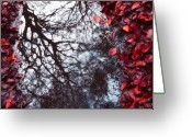 All Tree Greeting Cards - Autumn reflections II Greeting Card by Artecco Fine Art Photography - Photograph by Nadja Drieling