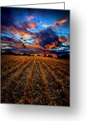 Natural Light Greeting Cards - Autumn Rising Greeting Card by Phil Koch