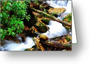 Trout Stream Greeting Cards - Autumn Serenity Greeting Card by Thomas R Fletcher