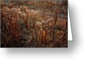 Autumn Colors Greeting Cards - Autumnal Greeting Card by Renata Vogl