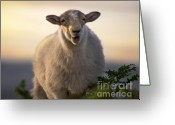 Mound Greeting Cards - Baa Baa Greeting Card by Angel  Tarantella