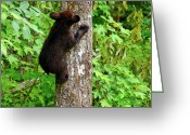 American Brown Bear Greeting Cards - Baby Bear Greeting Card by Christi Kraft