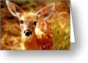 Fawns Greeting Cards - Baby Love Greeting Card by Emily Stauring