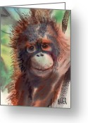 Orangutans Greeting Cards - Baby Orangutan Greeting Card by Donald Maier