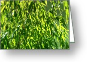 Bamboo Greeting Cards - Bamboo Greeting Card by Kristin Kreet
