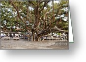 Louisiana Greeting Cards - Banyan Tree Greeting Card by Scott Pellegrin