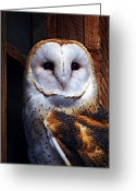 Barn Art Digital Art Greeting Cards - Barn Owl  Greeting Card by Anthony Jones