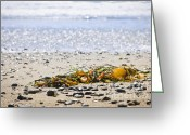 Pebbles Greeting Cards - Beach detail on Pacific ocean coast Greeting Card by Elena Elisseeva