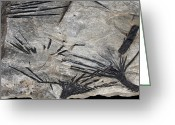 Precious Gem Greeting Cards - Black Tourmaline In Mica Schist Greeting Card by Dirk Wiersma