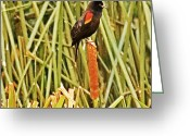 Oregon Wildlife Digital Art Greeting Cards - Blackbirds Song Greeting Card by Bonnie Bruno