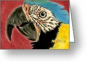 Gold Ceramics Greeting Cards - Blue and Gold Macaw Greeting Card by Dy Witt