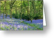 The Glade Greeting Cards - Blue glade Greeting Card by Ed Lukas