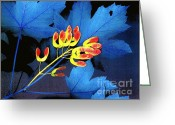 Pod Mixed Media Greeting Cards - Blue Maple Leaf Greeting Card by Bill  Thomson