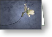 Dogwood Blossom Greeting Cards - Blue Spring Greeting Card by Ron Jones