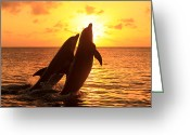 Bottle-nosed Dolphin Greeting Cards - Bottlenose Dolphins Greeting Card by Tier Und Naturfotografie J und C Sohns