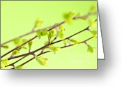 Natural Beauty Greeting Cards - Branches with green spring leaves Greeting Card by Elena Elisseeva