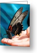 Chevalier Greeting Cards - Butterfly 2 Greeting Card by Elizabeth Chevalier