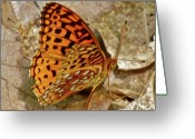 Designer Butterfly Works Photo Greeting Cards - Butterfly Gold Greeting Card by Debra     Vatalaro