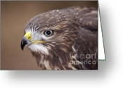 Buzzard Photo Greeting Cards - Buzzard - Detail Of The Head Greeting Card by Michal Boubin