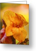 Canna Greeting Cards - Canna Greeting Card by Diana Cox