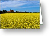 Denmark Greeting Cards - Canola Castle Greeting Card by Gert Lavsen