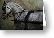 Wild Horses Greeting Cards - Cart Horse  Greeting Card by Lyndsey Warren