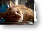 Buff Greeting Cards - Cat Nap Greeting Card by David Patterson