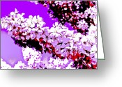 Trees Blossom Greeting Cards - Cherry Blossom Art Greeting Card by David Pyatt