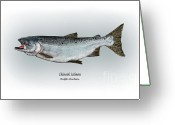 Game Drawings Greeting Cards - Chinook Salmon Greeting Card by Ralph Martens
