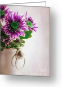 Purple Floral Greeting Cards - Chrysanthemums Greeting Card by Kristin Kreet