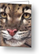 Colored Pencil Greeting Cards - Clouded Leopard Greeting Card by Pat Erickson