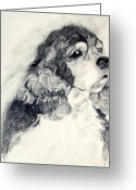 Spaniel Print Greeting Cards - Cocker Spaniel Greeting Card by Susan A Becker