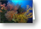 Oceania Greeting Cards - Colorful Assorted Sea Fans And Soft Greeting Card by Steve Jones
