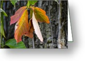 Changing Colors Greeting Cards - Colors of Fall Greeting Card by Julie Palencia