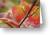 Red Leaves Greeting Cards - Colours of Autumn Greeting Card by Eena Bo
