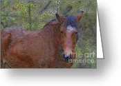 Quarter Horse Greeting Cards - Comfort Greeting Card by Deborah Benoit