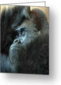 Wildlife Photos Greeting Cards - Confidence Greeting Card by Skip Willits