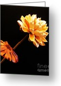 Flower Still Life Prints Greeting Cards - Contemporary Natural Flowers Greeting Card by Marsha Heiken