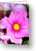 Purple Greeting Cards - Cosmo Flower Greeting Card by Cathie Tyler