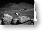 Dry Stone Wall Greeting Cards - Cows Field Ireland Irish Farmland Countryside Greeting Card by Joe Fox