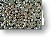 Pearls Greeting Cards - Cultured Freshwater Pearls Greeting Card by Vaughan Fleming