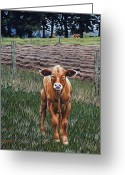 Rick Mckinney Greeting Cards - Curious Calf Greeting Card by Rick McKinney