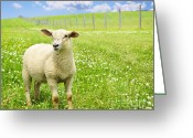 Grass Greeting Cards - Cute young sheep Greeting Card by Elena Elisseeva