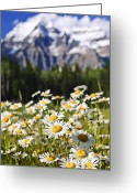 Mountain Summit Greeting Cards - Daisies at Mount Robson provincial park Greeting Card by Elena Elisseeva