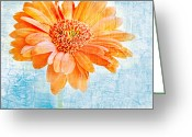Texture Flower Photo Greeting Cards - Daisy Greeting Card by HD Connelly