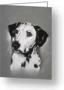 Hall Pastels Greeting Cards - Dalmatian Greeting Card by Patricia Ivy