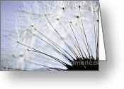 Dreamy Flower Greeting Cards - Dandelion  Greeting Card by Elena Elisseeva
